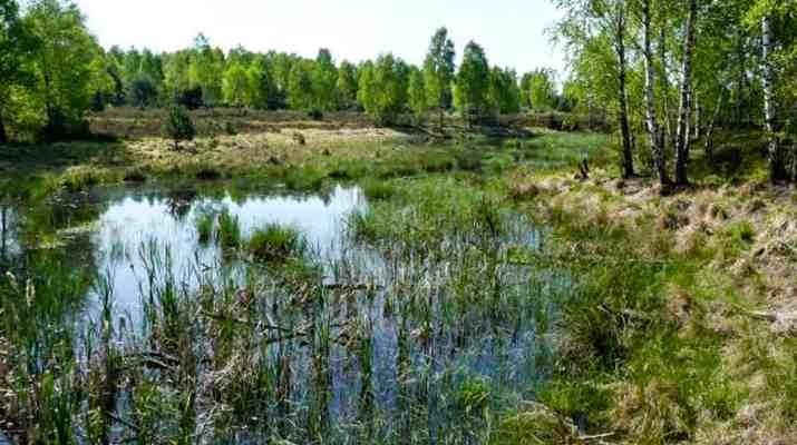 Foto_Lieberose_BrandenburgWildernessFoundation.jpg - European Wilderness Society - CC NonCommercial-NoDerivates 4.0 International