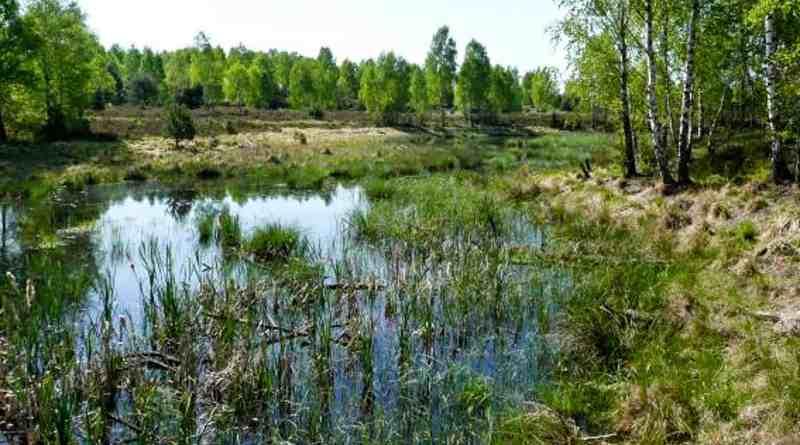 Foto_Lieberose_BrandenburgWildernessFoundation.jpg - © European Wilderness Society CC BY-NC-ND 4.0