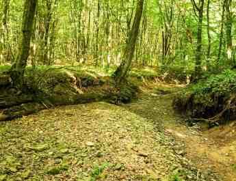 Deforestation Romania Hannes Knapp © All rights reserved