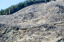 New report on illegal logging in Romania, WWF files EUTR complaint.
