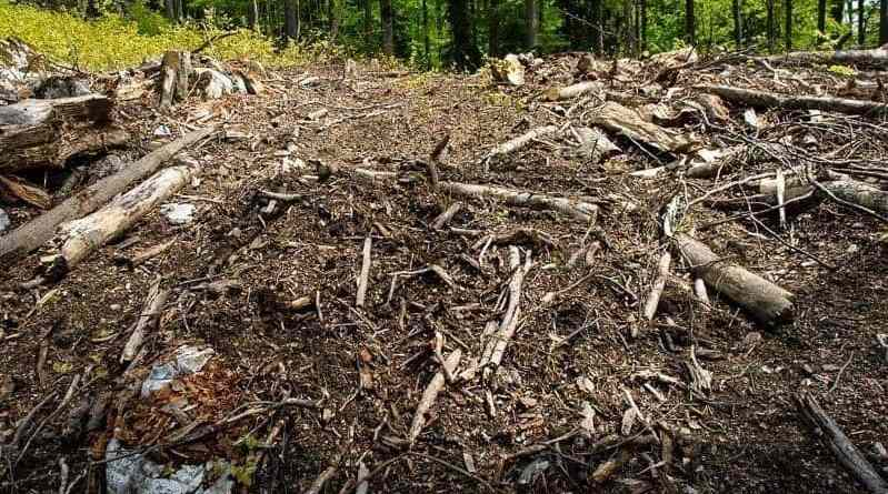 Threat: Romanian Cosava Virgin Forest