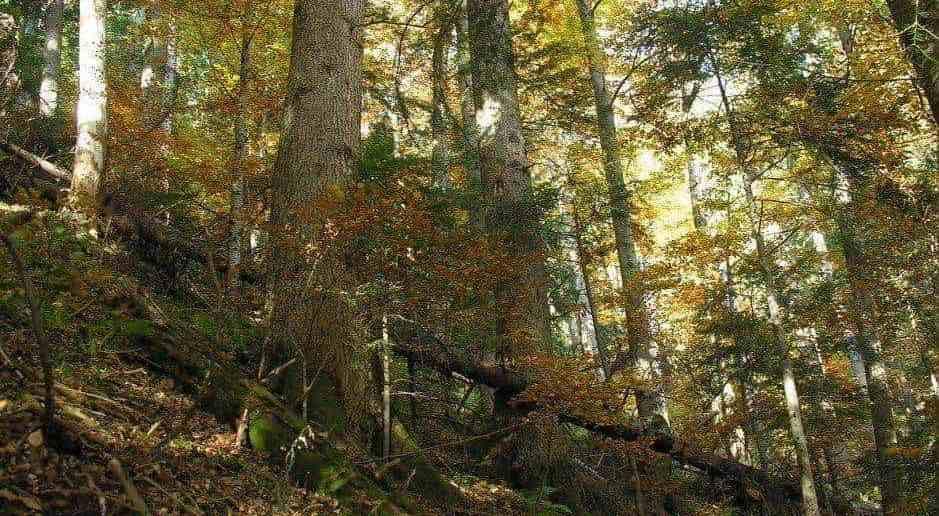 Gorgany Wilderness, Ukraine