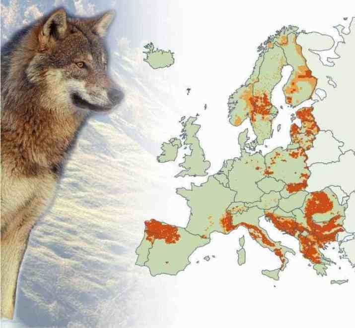 Wolves in Europe