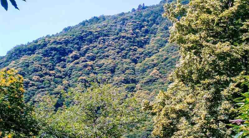 Val Grande 2005_Patrizia Digiovinazzo_0031.JPG - © European Wilderness Society CC BY-NC-ND 4.0