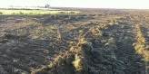 Drastic destruction of a unique wilderness in Ukraine