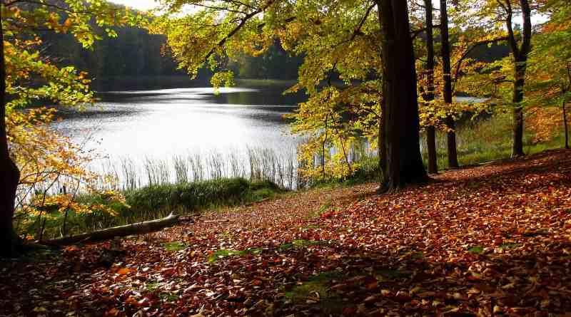 Biosphere Reserve Schorfheide Wilderness 0070.JPG - © European Wilderness Society CC BY-NC-ND 4.0