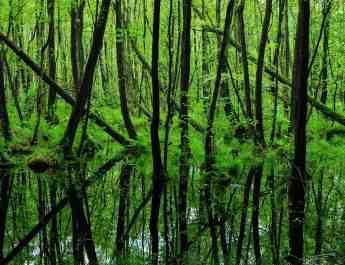 EWS - Biosphere Reserve Schorfheide Wilderness -00392_