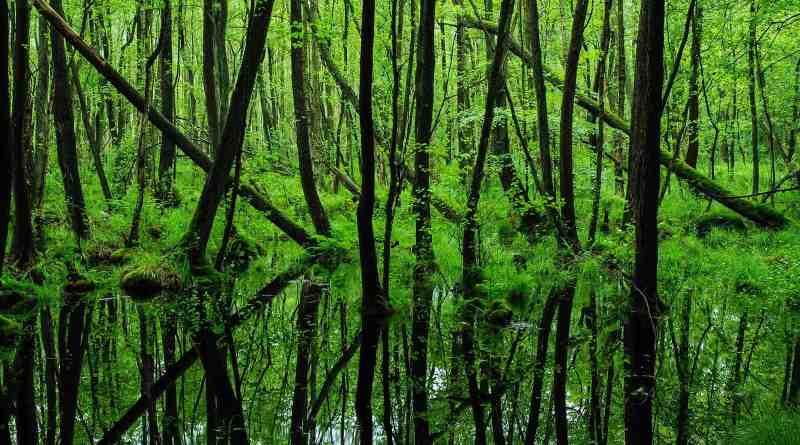 Biosphere Reserve Schorfheide Wilderness 0030.JPG - © European Wilderness Society CC BY-NC-ND 4.0