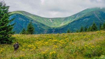Carpathian National Park 1221