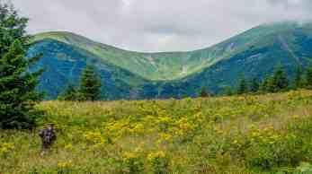 Carpathian National Park 1221