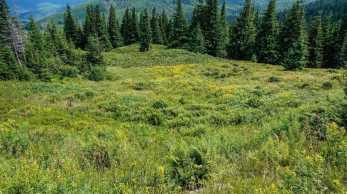 Carpathian National Park 1300
