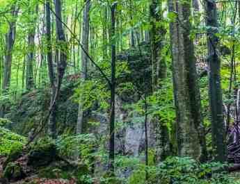 EWS - Uholka Sirokyy Luh Wilderness Exchange Programme -11872_