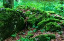 EWS - Uholka Sirokyy Luh Wilderness Exchange Programme -11911_.jpg