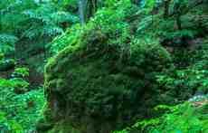 Carpatski Biosphere Reserve Uholka Wilderness 0754