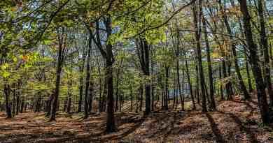 Central Balkan Wilderness - 27.JPG - © European Wilderness Society CC BY-NC-ND 4.0