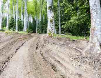 Deforestation Romania Hannes Knapp - © All rights reserved