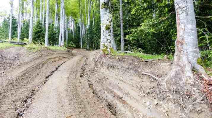 EWS - Deforestation Romania Hannes Knapp -03453_