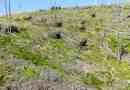 Deforestation Romania Hannes Knapp 0081.JPG - © European Wilderness Society CC BY-NC-ND 4.0