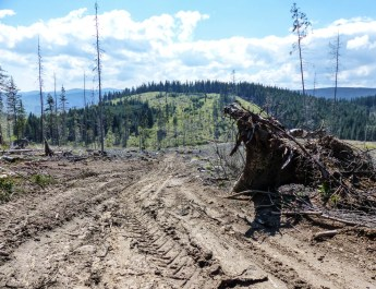 Deforestation Romania Hannes Knapp
