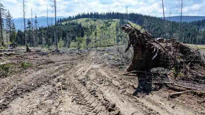 Deforestation Romania Hannes Knapp 0086.JPG - © European Wilderness Society CC BY-NC-ND 4.0
