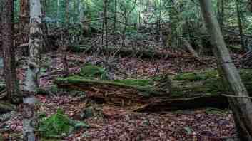 Gorgany Strict Nature Reserve 0983