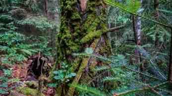 Gorgany Strict Nature Reserve 0990