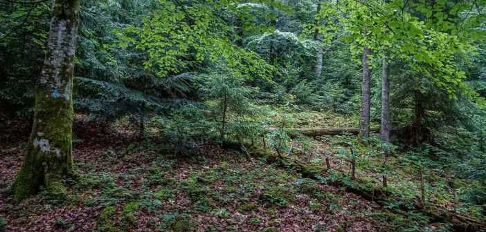 European Wilderness Quality Standard Gorgany Wilderness Quick-Audit published