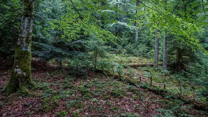 Gorgany Strict Nature Reserve 0997