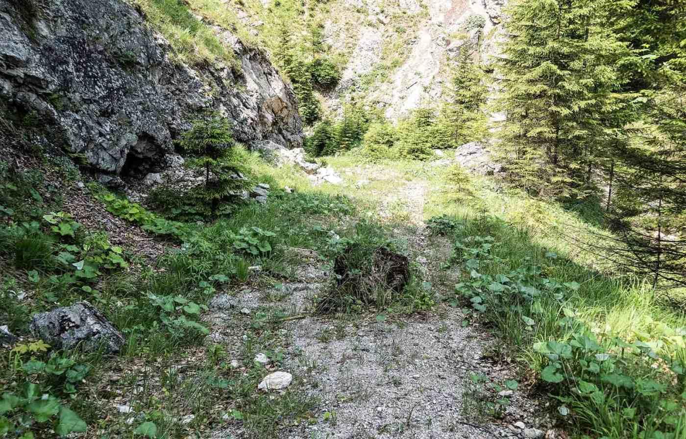 Kalkalpen Wilderness 233.jpg - © European Wilderness Society CC BY-NC-ND 4.0
