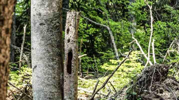 Kalkalpen Wilderness 242.jpg - © European Wilderness Society CC BY-NC-ND 4.0