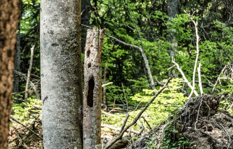Kalkalpen Wilderness 238
