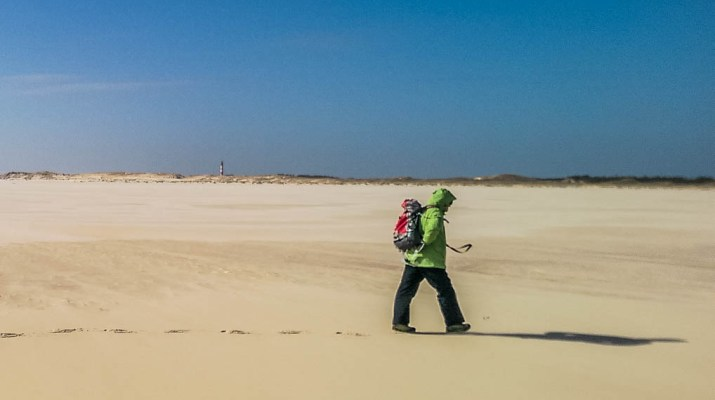 WILDCoast Amrum North Sea - © All rights reserved