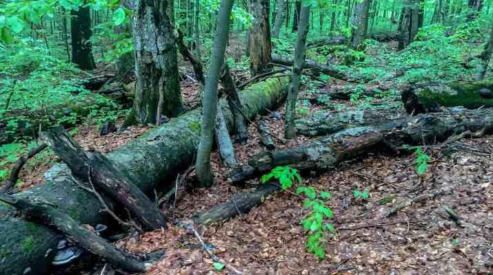 EWS - Zacharovanyy Kray Wilderness Exchange Programme -09999_