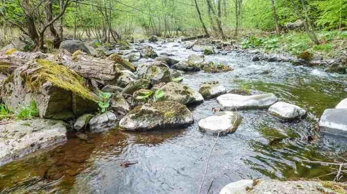 Zacharovanyy Kray WIlderness Exchange 1.jpg - © European Wilderness Society CC BY-NC-ND 4.0
