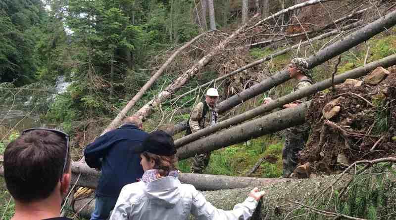 Ukraine Sanitary Logging Analysis 0096.jpg - © European Wilderness Society CC BY-NC-ND 4.0