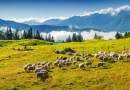 Alpine herd_shutterstock.jpg - ©  All Rights Reserved