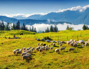 Alpine herd_shutterstock.jpg - © All Rights Reserved