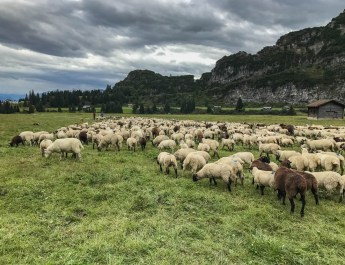 Sheep Herd Management 0168.jpg - © European Wilderness Society CC BY-NC-ND 4.0