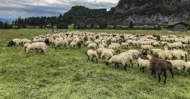 Sheep Herd Management 0168.jpg - © European Wilderness Society CC BY-NC-ND 4.0