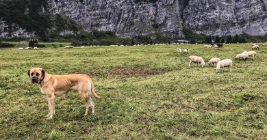 Livestock Protection - 7644.JPG - © European Wilderness Society CC BY-NC-ND 4.0