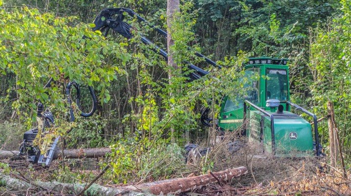 Bialowieza Logging - Artur Wiśniewski