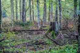 Bialowieza Logging - Mirosław Król00018
