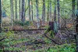 Bialowieza Logging - Mirosław Król - © All rights reserved