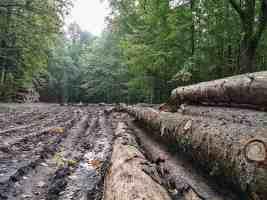 Bialowieza Logging - Radosław Ślusarczyk00008