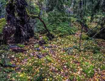 2017-10-14 13.03.23.jpg - © European Wilderness Society CC BY-NC-ND 4.0