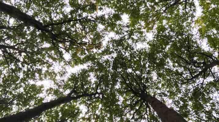 European-Beech-Forest-Network-Vilm-2017-0102.jpg - European Wilderness Society - CC NonCommercial-NoDerivates 4.0 International