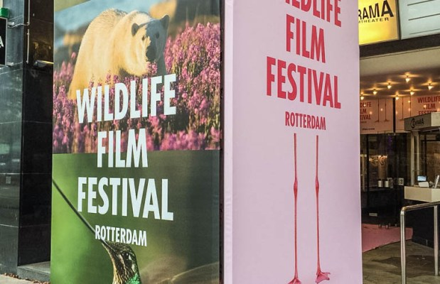 Wildlife film Festival Rotterdam - © All rights reserved