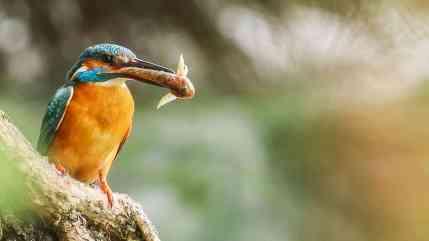 poas-vchovy-mlat-sa-musia-dospel-rybriky-poriadne-obraca_35480818844_o.jpg - © European Wilderness Society CC BY-NC-ND 4.0