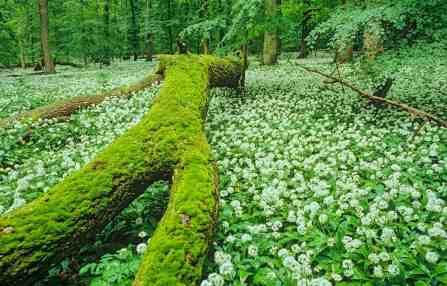 National Park Hainich Wilderness - 00002