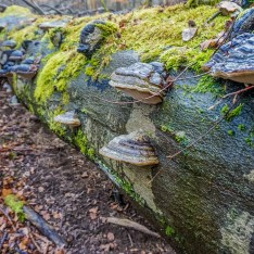 national-park_hainich_wilderness_1778.JPG - © European Wilderness Society CC BY-NC-ND 4.0